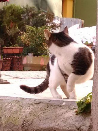 Kisse utanför tvättinrättningen (tillika populär kattglugg) i Sultanahmed.