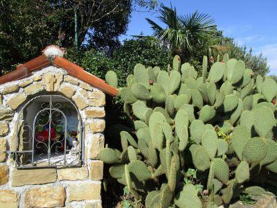 Andlighet och kaktusar.